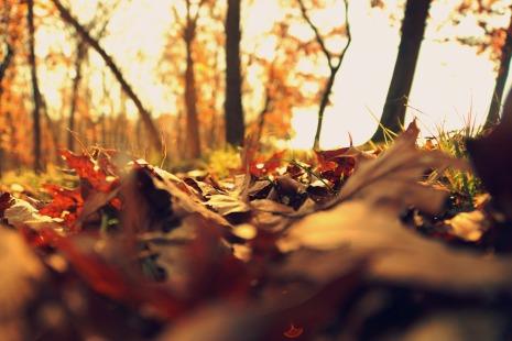 fall-2255303_1920